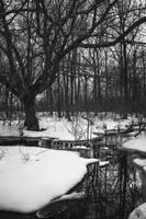 Winter's Grasp by JustinDeRosa