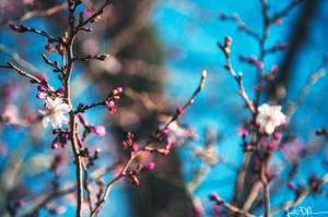 Chasing Spring by JustinDeRosa
