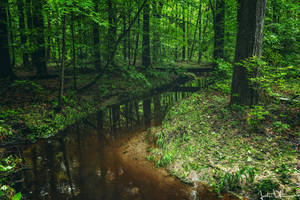 The Deep Forest by JustinDeRosa