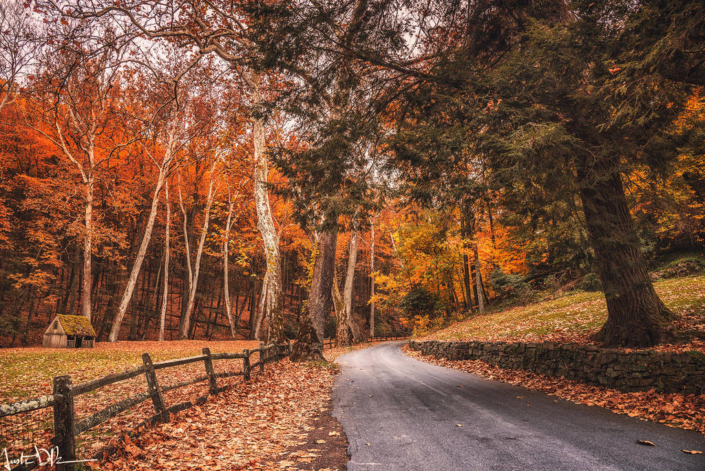 Autumn Silence by JustinDeRosa