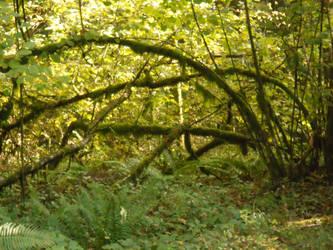 Nature stock 1 by lavitzstrife