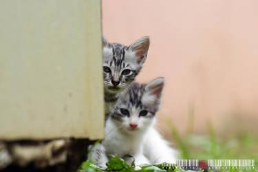 Shy Kitty 7, Tabby and Lilo by adrianhefni