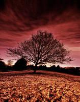 Coloured Solitude by EmanuRenton