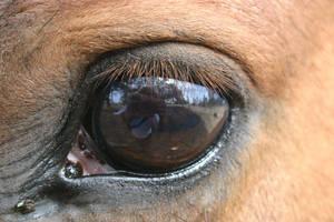 Cowboy's eye by mbrsart