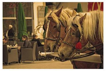 horses by Wiedzma13