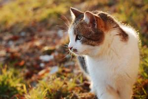 Make friends with strange cats by WinterSafari