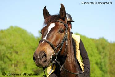 Handsome W by Kladdkrita