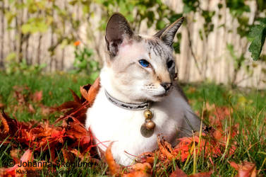 Autumn by Kladdkrita