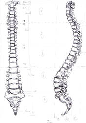 Human spine by MauricioKanno