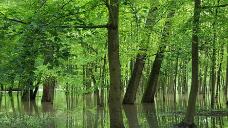 A land of green silence by Parchemin