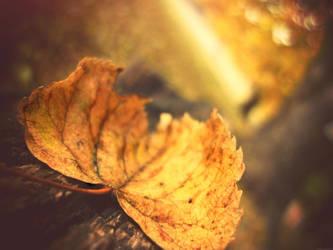 Autumn leaf3 by Dileyla