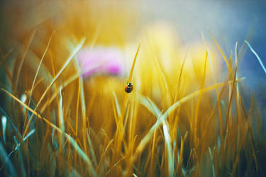 Lady Bug climb by Dileyla