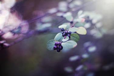 purple magic by Dileyla