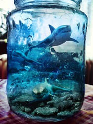 My Sharks ^_^ by Dileyla