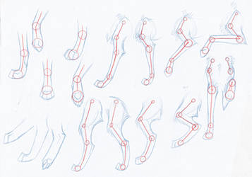 How to Draw Wolves: Arms.Legs by Kimai