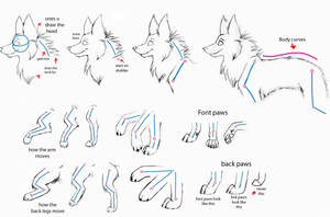 How to draw wolfs- Part2 by Kimai