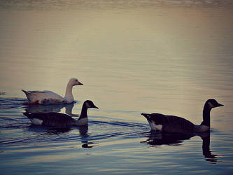 Evening swim by Ellie-2607