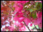 Pink Leaves by GlacierFusion