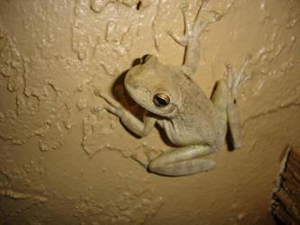 froggy by jake5