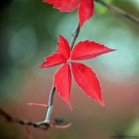 leaf by lovemyscars