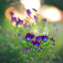 sunset flowers by lovemyscars