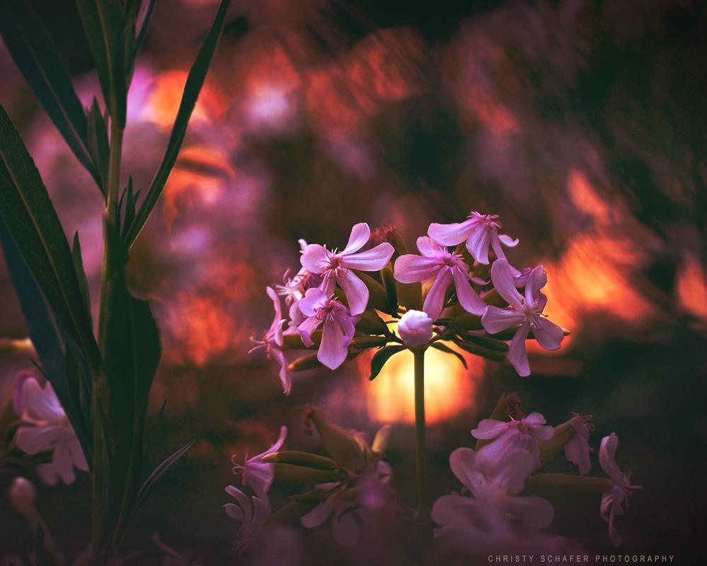 light my fire by lovemyscars