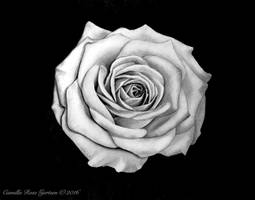 White Rose by CamillaRoseGjertsen