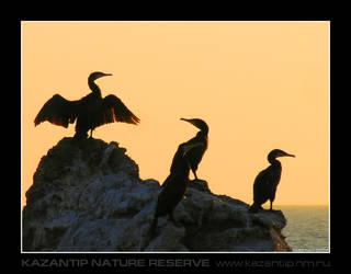 Cormorants by inObrAS