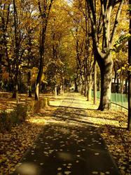 autumn falls1 by prAEtoria