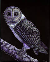 Blue Owl Scratchboard by BeccaPearl