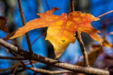 Autumn Up Close by jjcpix