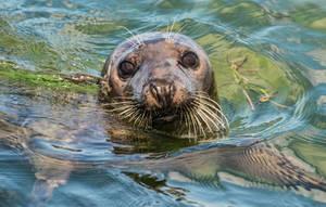 A Seal by jjcpix