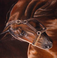 Portrait of a Horse by MelloYello