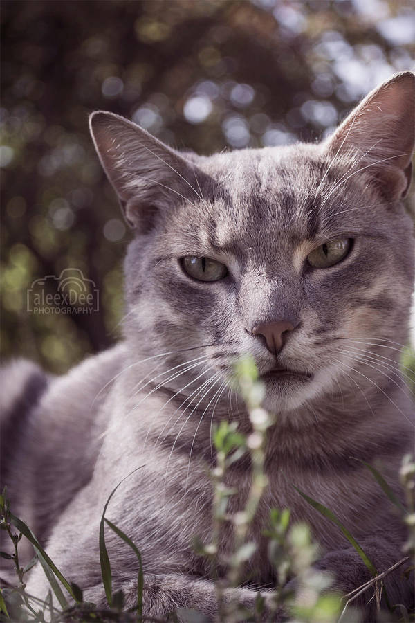Silver Cat by aleexdee