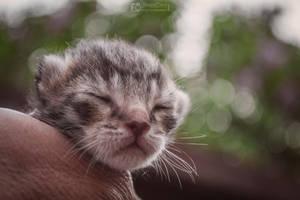 Newborn kitty by aleexdee