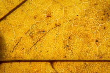 Leaf Pattern 7 by aleexdee