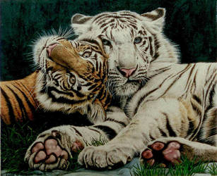 Tigers by Face-Reality