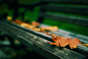 regular leaves of the bank by deliberated
