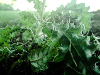 Macro shot of the spike plants by manders123