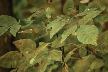 macro leaves shot by manders123