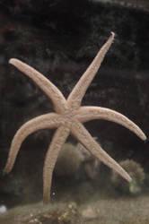 Starfish by manders123