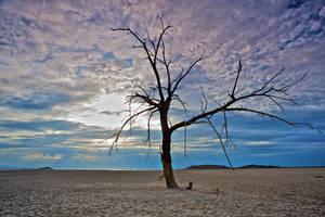 desert tree stock 1 by stockf8