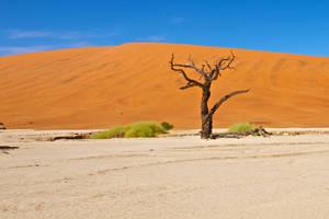 orange sand and tree stock by stockf8
