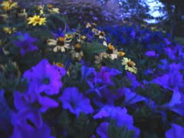 Darkening Garden by PTPenguino