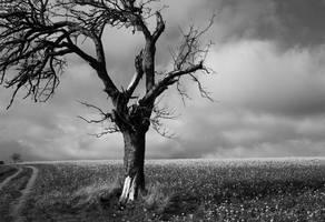 apple tree by LastAutumnShade