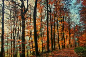 Autumn by LastAutumnShade