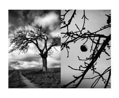 apple tree no.2 by LastAutumnShade