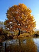 Autumn by DarkAfi4