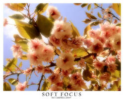 Soft Focus by Bad-Company-101