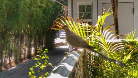 Bird on the Rail by LordPint